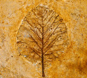 The Leaf imprint. On concrete floor stock images