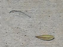 Leaf and Imprint. An oak leaf and a leaf imprint in concrete Royalty Free Stock Photos