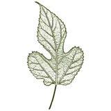leaf imprint, sheet printing Stock Photo