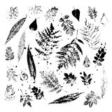 Leaf imprints. Leaves on white background. Vector illustration. Stock Image