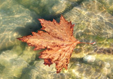 Leaf In Creek Royalty Free Stock Photo
