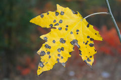 Leaf insect bites Royalty Free Stock Photos