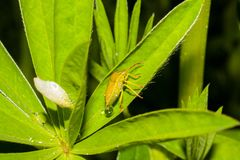 Leaf, Insect, Grasshopper, Close Up stock photo