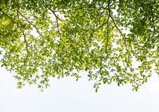 Leaf isolated on white background stock image