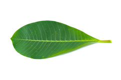 Leaf isolated Royalty Free Stock Photography