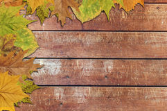 Leaf isolated on wooden background, text background Royalty Free Stock Images