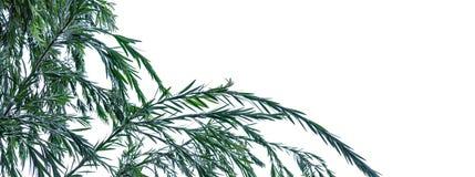 Leaf isolation on white background stock photography