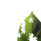 Leaf jigsaw Stock Image