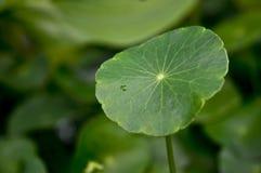 Leaf in a Jungle Stock Photo