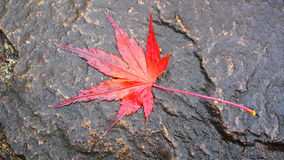 A leaf Royalty Free Stock Image