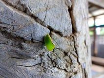 Leaf katydid stock images