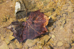 Leaf in a lake. Abstract image of a leaf in a lake showing texture of the sand and rocks surrounding it Stock Image