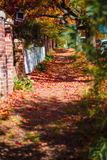 Leaf lane Royalty Free Stock Photo