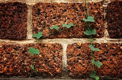Leaf on laterite on brick Stock Image
