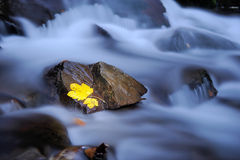 Leaf is laying on wet basalt stone Royalty Free Stock Images