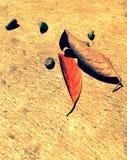 Leaf,leaf Royalty Free Stock Image