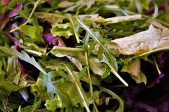 Leaf, Leaf Vegetable, Vegetable, Spring Greens