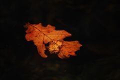 Leaf. S floating in the sea Royalty Free Stock Images