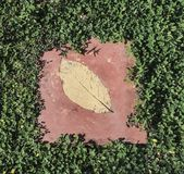 The Leaf. Leaf among leafs in the garden small plant step spot cement printed golden Stock Images