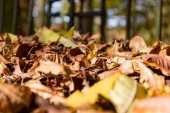 Leaf leaves in autumn Royalty Free Stock Image