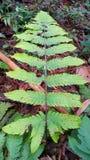 Leaf. Leaves design in one leaf Stock Photo