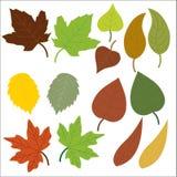 Leaf, Leaves, Oak, Maple, Green Royalty Free Stock Photo