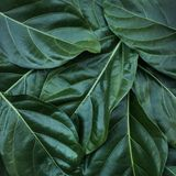 Leaf, leaves texture background. nature tropical concept royalty free stock photos