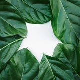 Leaf, leaves texture background. nature tropical concept stock photo