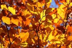 Leaf, Leaves, Yellow, Autumn, Fall Stock Photo