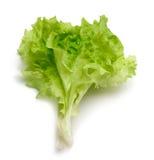 Leaf lettuce Stock Images