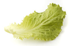 Leaf of lettuce Stock Photos