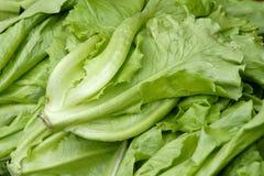 Leaf lettuce. The background of leaf lettuce Stock Images