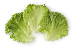 Leaf Lettuce Royalty Free Stock Photo