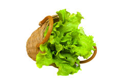 Leaf of lettuce and basket isolated on a white. Leaf of green lettuce and wattled basket isolated on a white background Royalty Free Stock Images