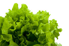 Leaf lettuce close-up. On white background Royalty Free Stock Photo