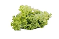 Leaf lettuce Royalty Free Stock Images