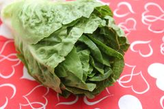 Leaf Lettuce. Some fresh leaf lettuce in green on a plate royalty free stock image
