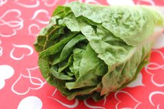 Leaf Lettuce. Some fresh leaf lettuce in green on a plate stock photography