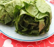 Leaf Lettuce. Some fresh leaf lettuce in green on a plate royalty free stock photography