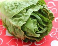 Leaf Lettuce. Some fresh leaf lettuce in green on a plate stock images