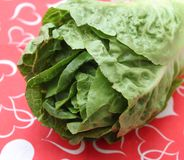 Leaf Lettuce. Some fresh leaf lettuce in green on a plate stock photos