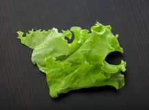 Leaf of lettuce on the wooden table Stock Photos