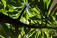 Leaf. stock photo