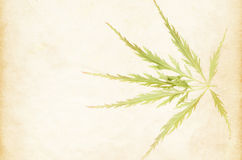 japanese maple leaf on a light paper background Royalty Free Stock Photo