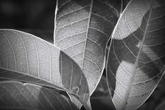 Leaf with light and shadow Stock Photo