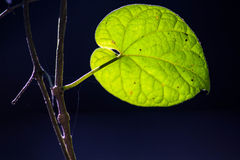 Leaf and light Royalty Free Stock Image