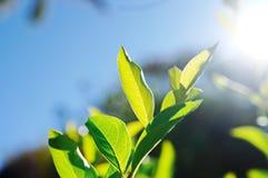 Leaf on light Stock Photo
