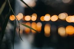 Leaf and lights defocused and blurry backgrounds royalty free stock image