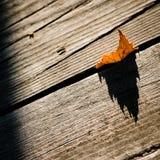 Leaf like a flame Stock Image