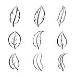 Leaf line design Stock Photos